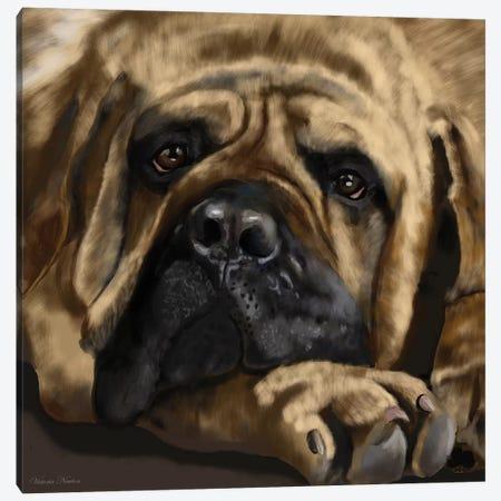 Mastiff Canvas Print #VNE53} by Vicki Newton Canvas Artwork