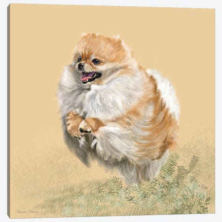 Pomeranian Canvas Print #VNE58} by Vicki Newton Canvas Art
