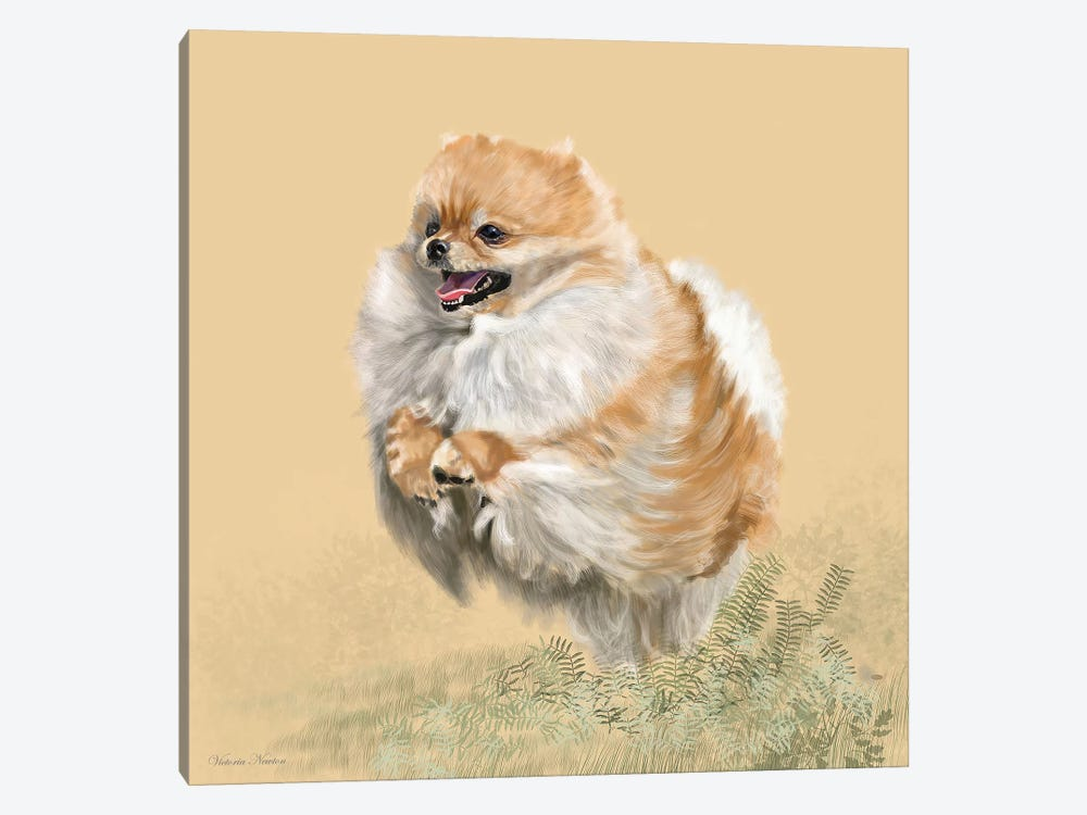 Pomeranian by Vicki Newton 1-piece Canvas Art Print