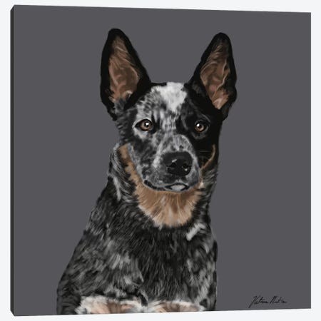 Australian Cattle Dog Canvas Print #VNE5} by Vicki Newton Canvas Art