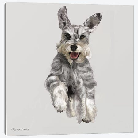 Schnauzer Canvas Print #VNE63} by Vicki Newton Canvas Art Print