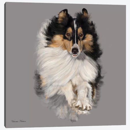 Sheltie Canvas Print #VNE66} by Vicki Newton Canvas Wall Art