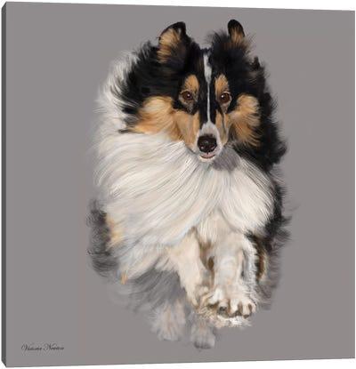 Sheltie Canvas Art Print