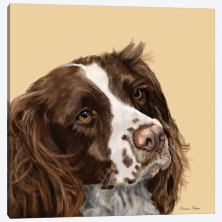 Spaniel Canvas Print #VNE67} by Vicki Newton Canvas Wall Art