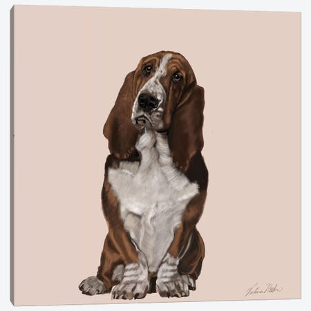Bassett Hound Canvas Print #VNE6} by Vicki Newton Canvas Wall Art
