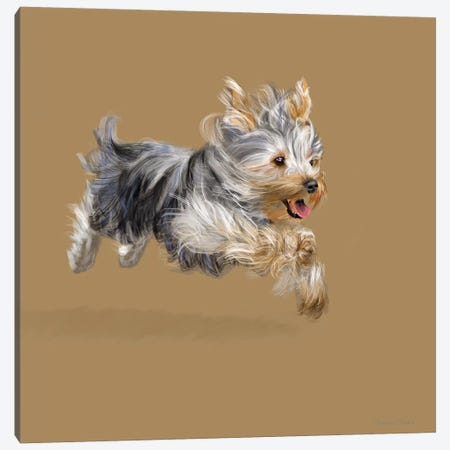 Yorkshire Terrier Canvas Print #VNE70} by Vicki Newton Canvas Wall Art
