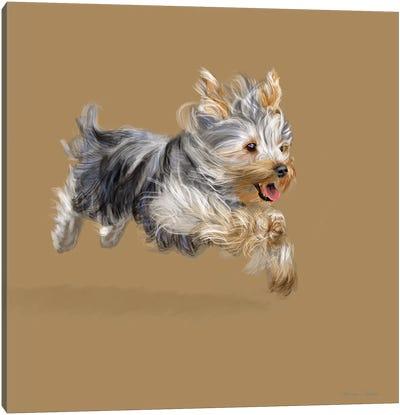 Yorkshire Terrier Canvas Art Print