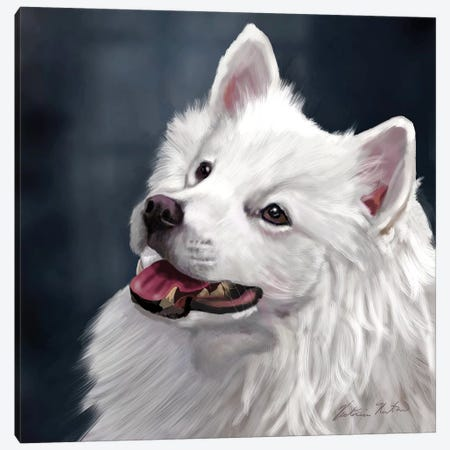 American Eskimo Canvas Print #VNE71} by Vicki Newton Canvas Wall Art