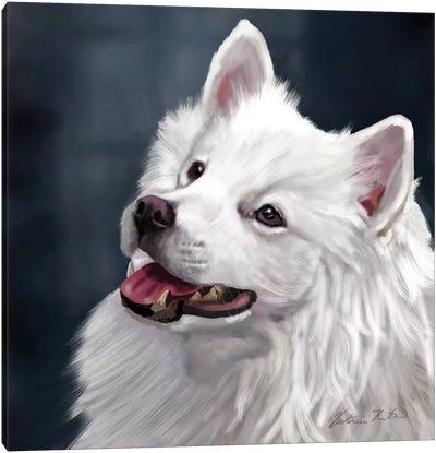 American Eskimo Canvas Art Print