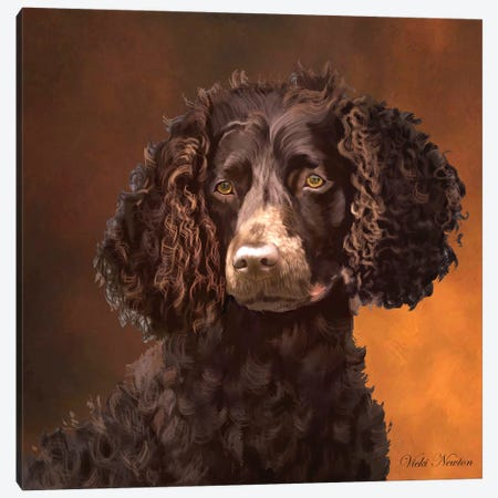 American Water Spaniel Canvas Print #VNE72} by Vicki Newton Canvas Artwork