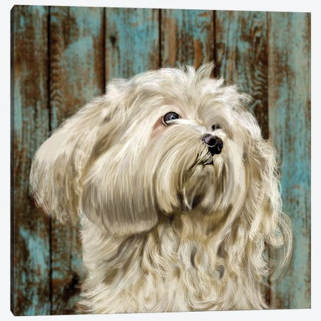 Bichon Frise Canvas Print #VNE73} by Vicki Newton Canvas Artwork