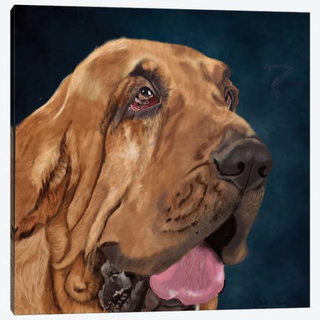 Bloodhound Canvas Print #VNE74} by Vicki Newton Canvas Art Print