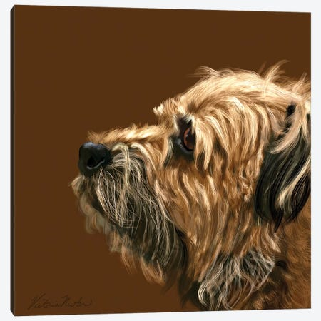 Border Terrier Canvas Print #VNE75} by Vicki Newton Art Print