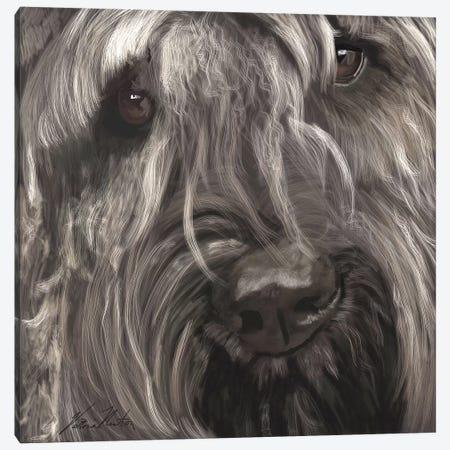 Bouvier Canvas Print #VNE76} by Vicki Newton Canvas Art Print