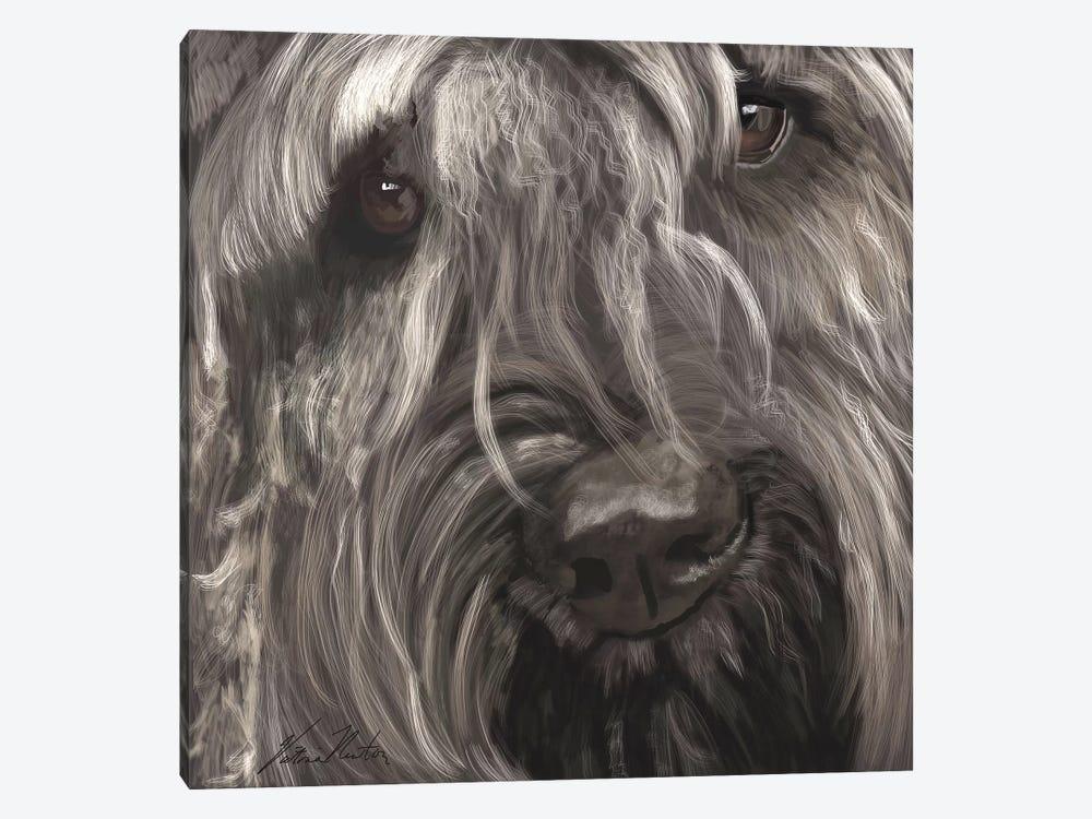Bouvier by Vicki Newton 1-piece Canvas Print