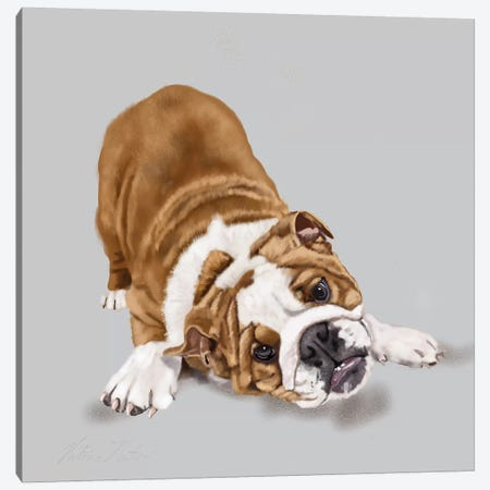 Bulldog Puppy Canvas Print #VNE77} by Vicki Newton Canvas Art Print