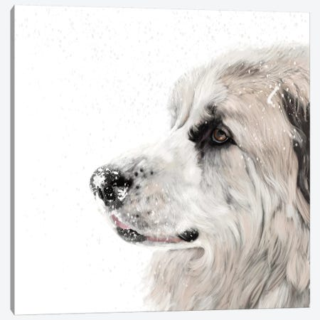 Great Pyrenees Canvas Print #VNE79} by Vicki Newton Canvas Art