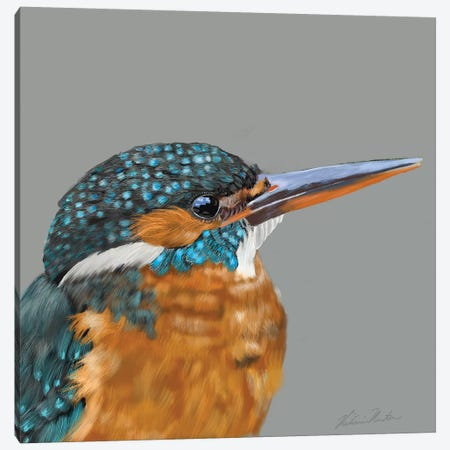 Kingfisher Canvas Print #VNE80} by Vicki Newton Canvas Art Print