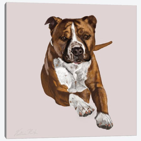 Pit Bull Comin Your Way Canvas Print #VNE83} by Vicki Newton Canvas Print