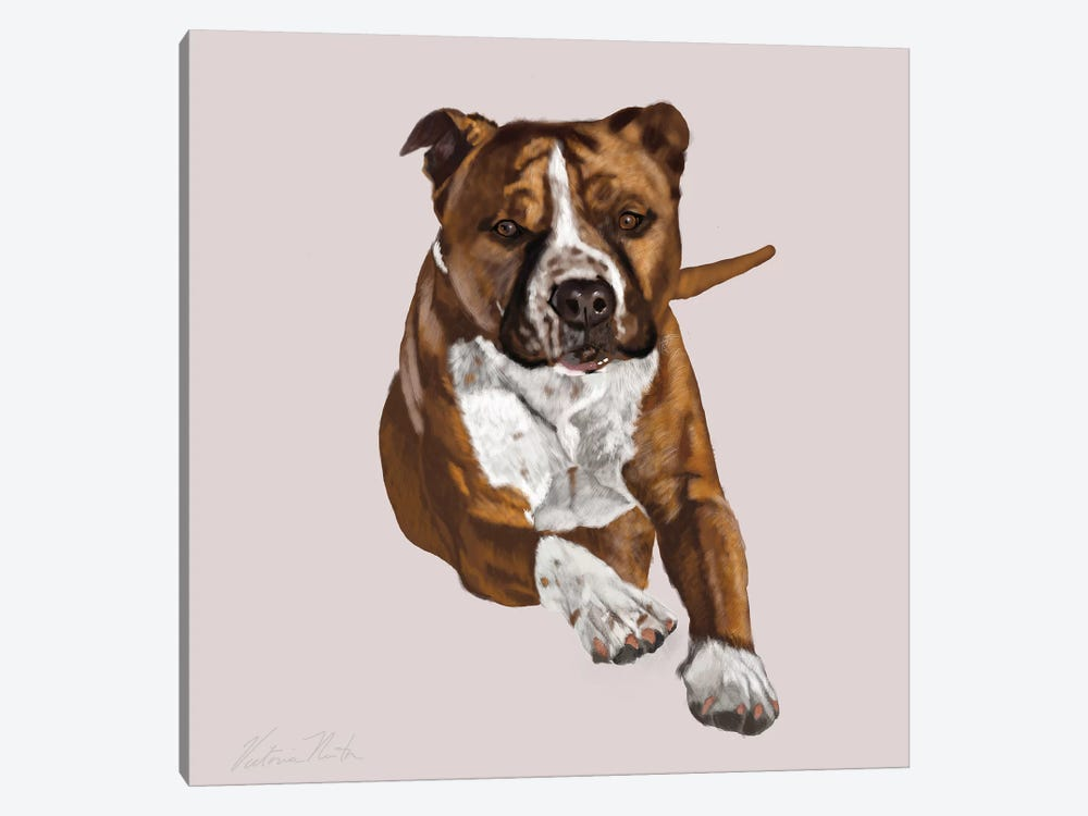 Pit Bull Comin Your Way by Vicki Newton 1-piece Art Print