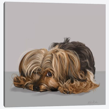 Yorkshire Terrier One Eye Open Canvas Print #VNE96} by Vicki Newton Canvas Art Print