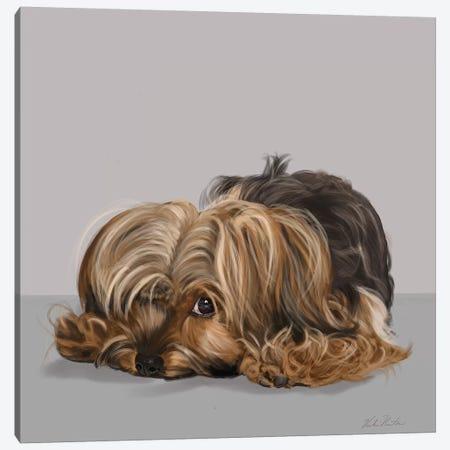 Yorkshire Terrier One Eye Open Canvas Print #VNE96} by Vicki Newton Canvas Art Print