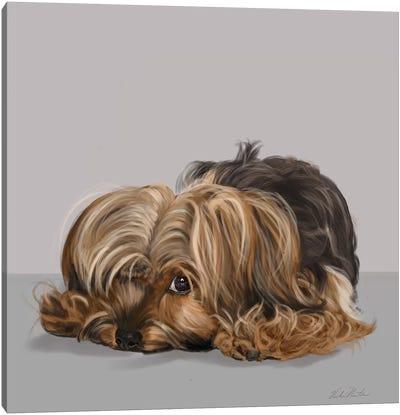 Yorkshire Terrier One Eye Open Canvas Art Print