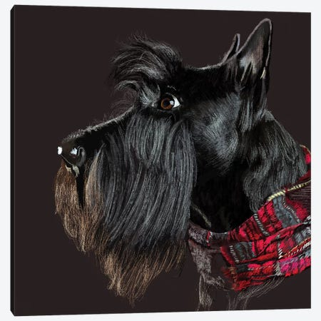 Scottie In Scarf Canvas Print #VNE97} by Vicki Newton Art Print