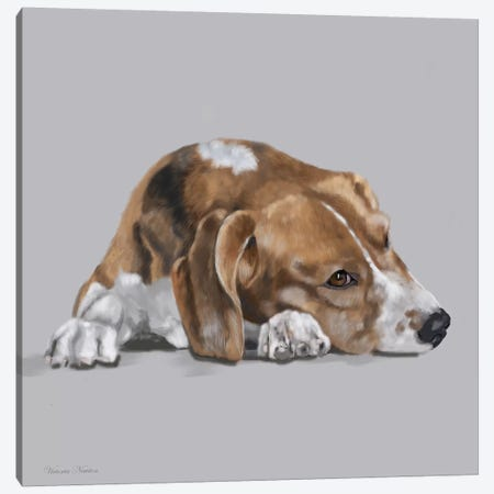 Beagle Lyng Down Canvas Print #VNE9} by Vicki Newton Art Print