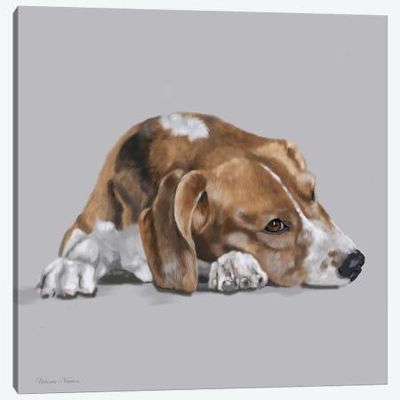 Beagle Lyng Down Canvas Print #VNE9} by Vicki Newton Art Print