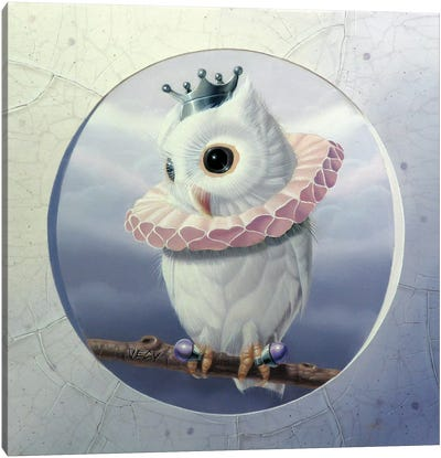 The Banded Little Owl Canvas Art Print