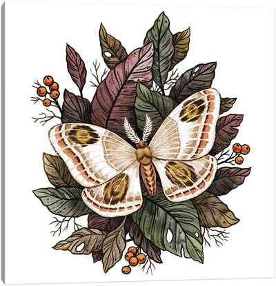 Autumn Moth Canvas Art Print