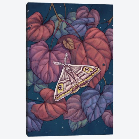 Midnight Moth Canvas Print #VRK27} by Vasilisa Romanenko Canvas Art Print