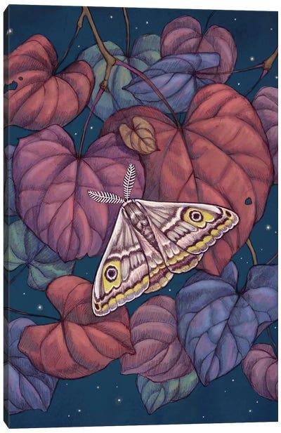 Midnight Moth Canvas Art Print