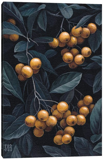 Firethorn Berries Canvas Art Print