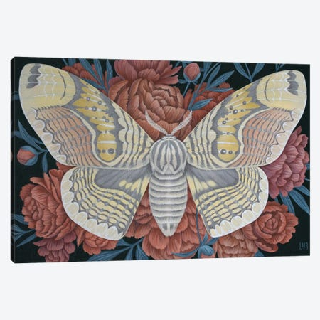 Brahmin Moth Canvas Print #VRK54} by Vasilisa Romanenko Canvas Art