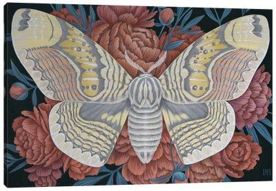 Brahmin Moth Canvas Art Print