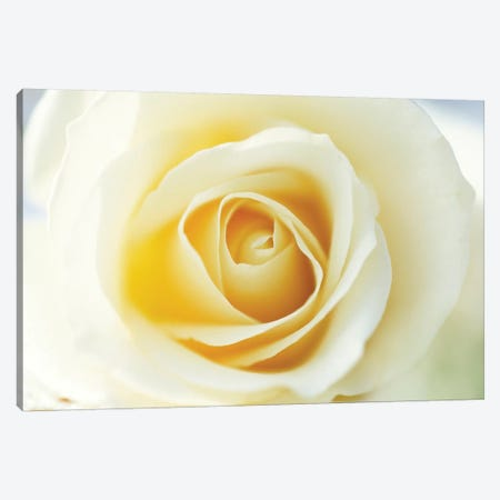 Rose Close Up Of White Rose In Bloom Canvas Print #VRM1} by Jan Vermeer Canvas Art Print