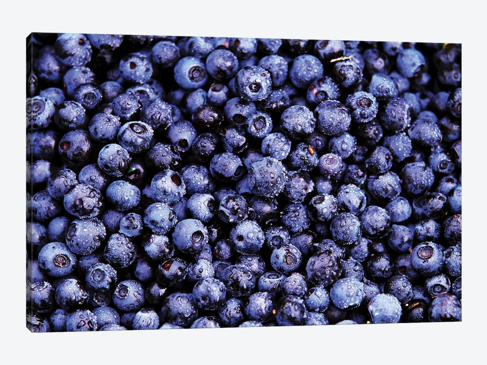Bilberry Close Up Of Harvested Berries, North America by Jan Vermeer 1-piece Canvas Wall Art