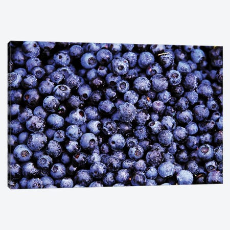 Bilberry Close Up Of Harvested Berries, North America 3-Piece Canvas #VRM2} by Jan Vermeer Art Print