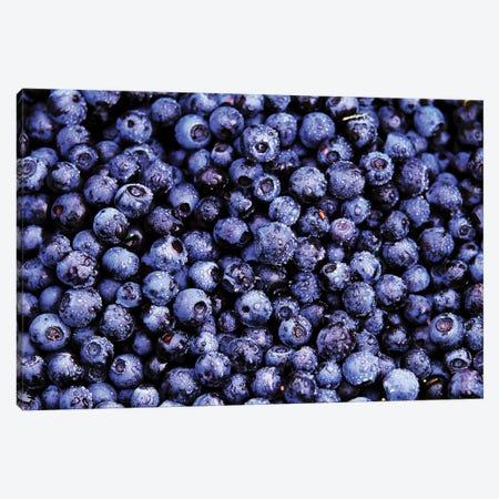 Bilberry Close Up Of Harvested Berries, North America Canvas Print #VRM2} by Jan Vermeer Art Print