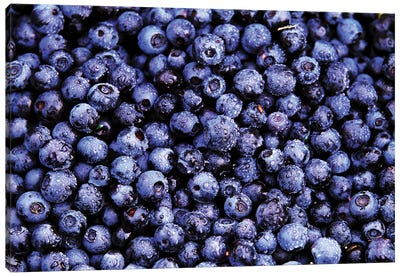 Bilberry Close Up Of Harvested Berries, North America Canvas Art Print