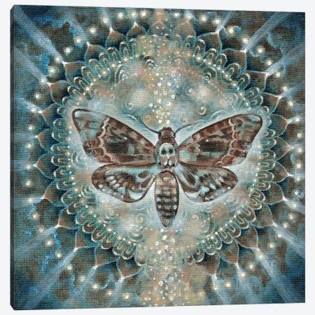 Hidden Knowledge Canvas Print #VRW9} by Verena Wild Canvas Art