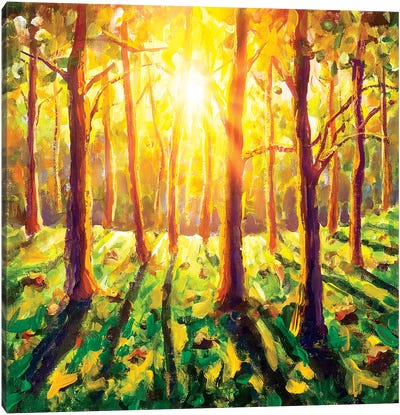 Sun In Forest Canvas Art Print