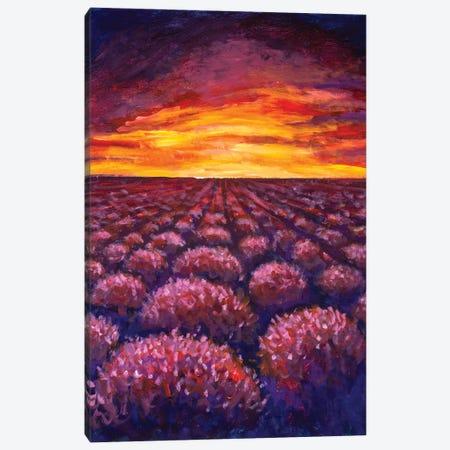 Lavender Field At Provence, France Canvas Print #VRY203} by Valery Rybakow Canvas Art