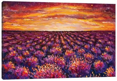 Sunset Over Lavender Field Canvas Art Print