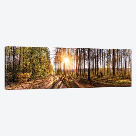 Sunny Day In Forest Panorama Canvas Print #VRY218} by Valery Rybakow Canvas Print