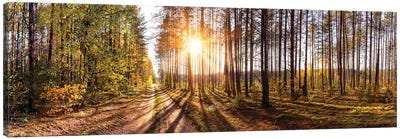Sunny Day In Forest Panorama Canvas Art Print