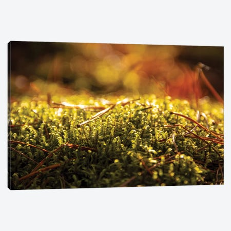 Lush Green Moss Close-Up Canvas Print #VRY220} by Valery Rybakow Canvas Artwork