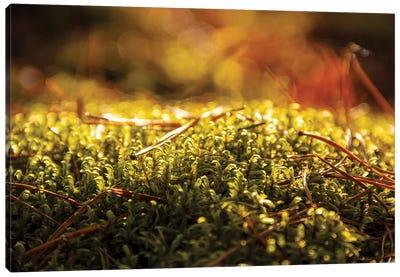 Lush Green Moss Close-Up Canvas Art Print